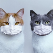 Two Cats with Masks On
